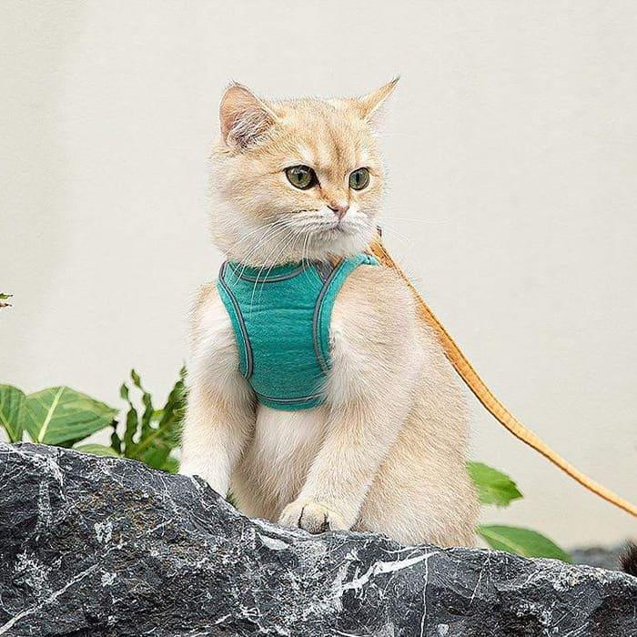 Pre bezpečnosť mačky image